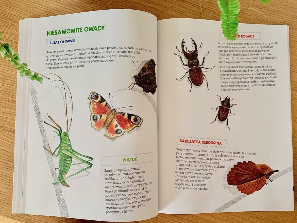 zeszyt obserwacji przyrodniczych